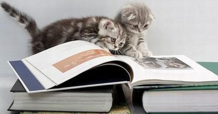 Due gattini che leggono un libro
