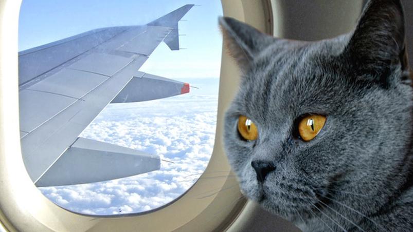 Felino in aereo
