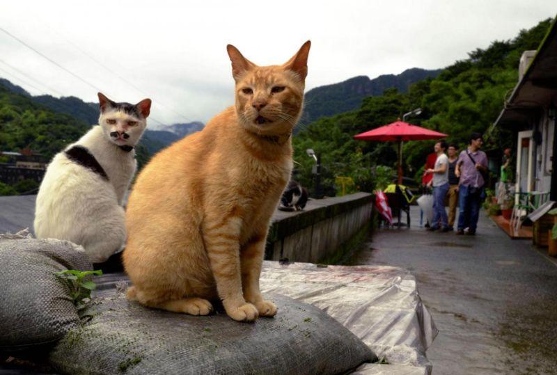 Gatti che guardano