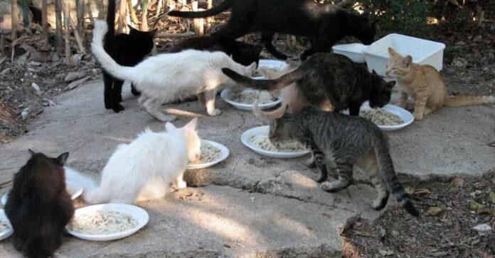 Gatti di una colonia felina