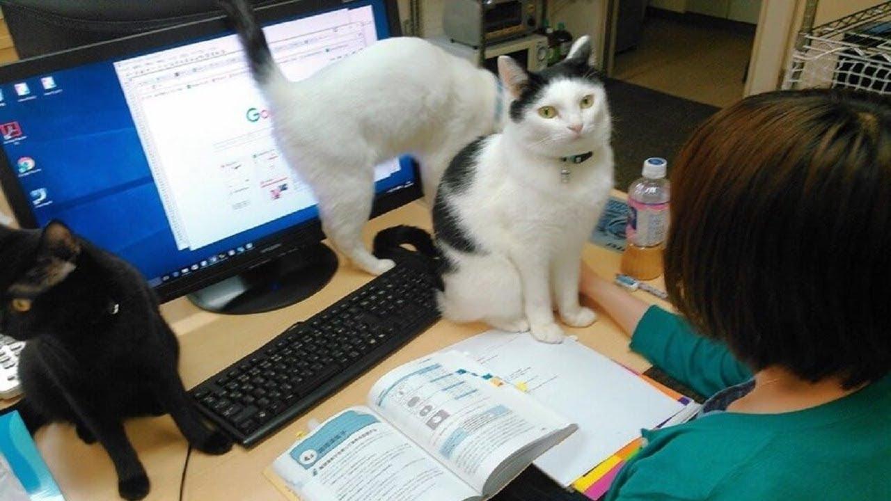 Gatti in ufficio