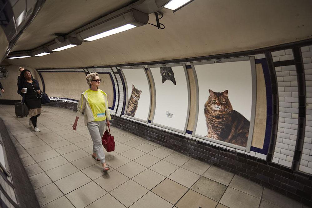 Gatti negli annunci pubblicitari in metro