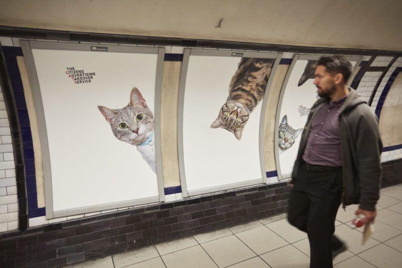 Gatti negli annunci pubblicitari