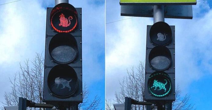 Gatti nei semafori in Russia