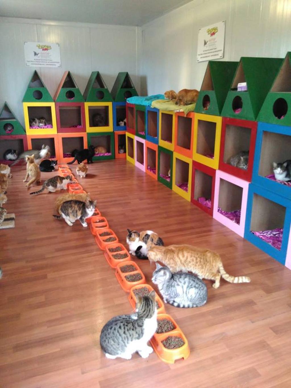 Gatti nella città di Samsun