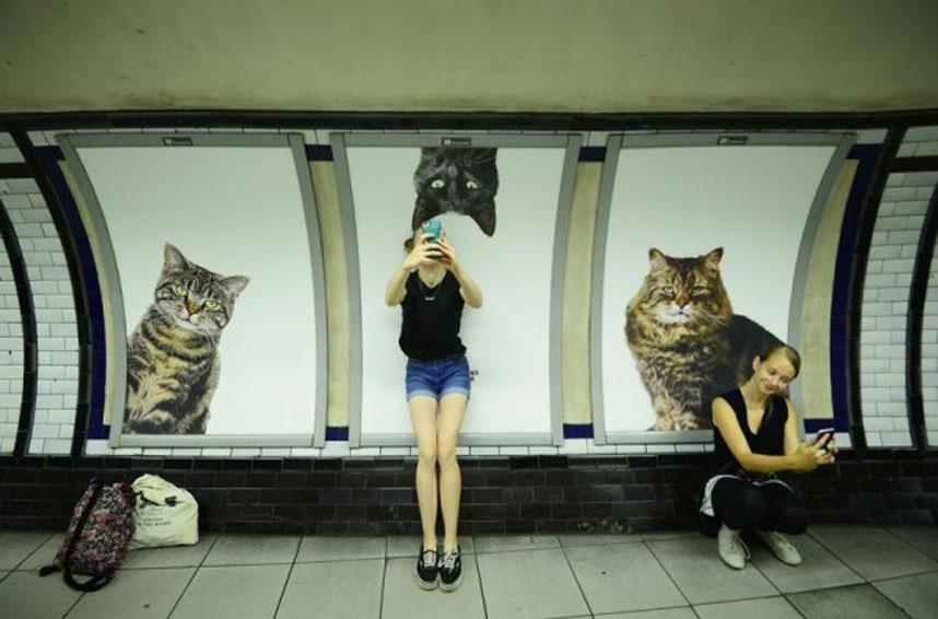 Gatti sugli annunci pubblicitari della metro di Londra