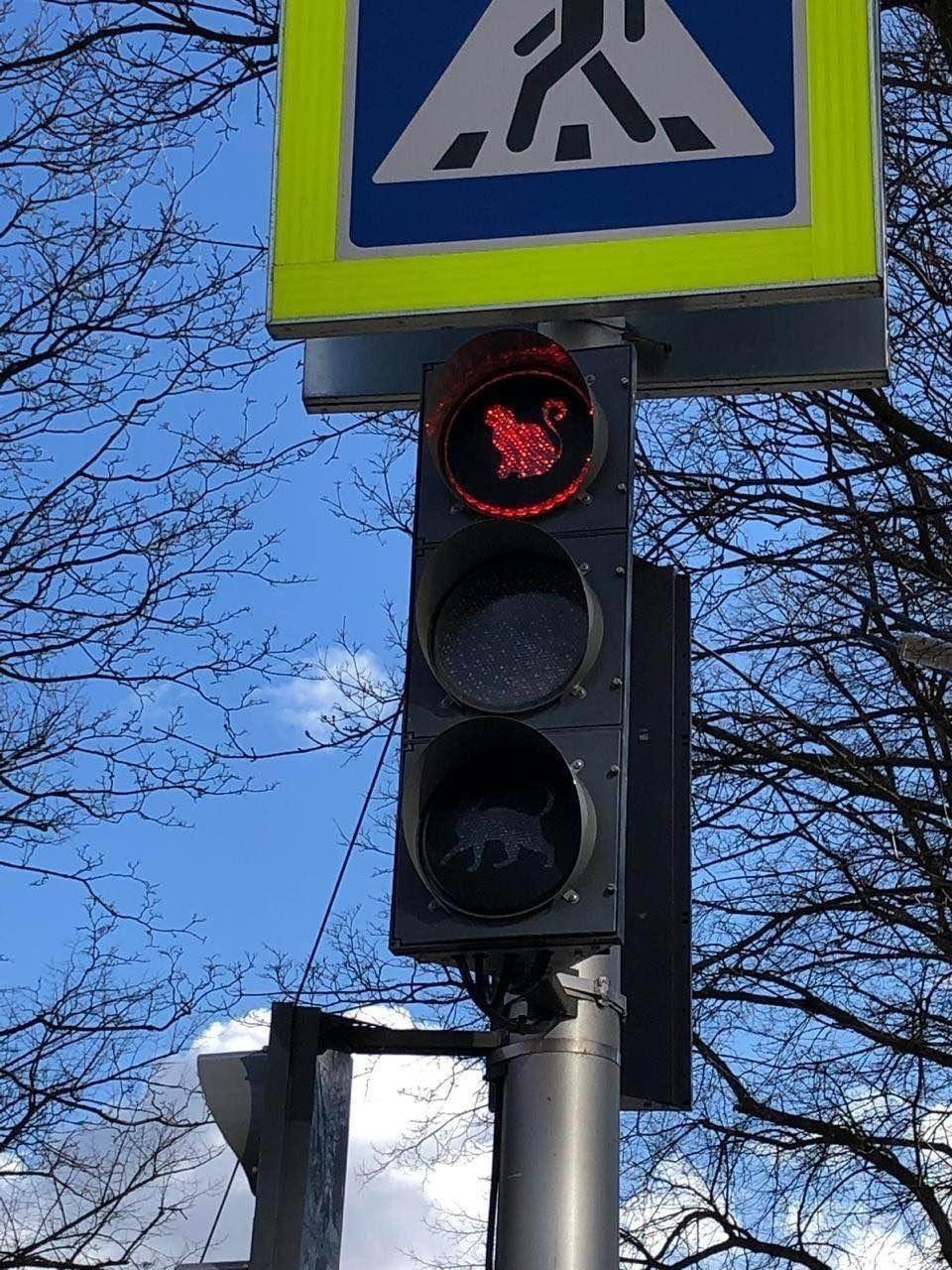 Gatti sui semafori in una città Russa