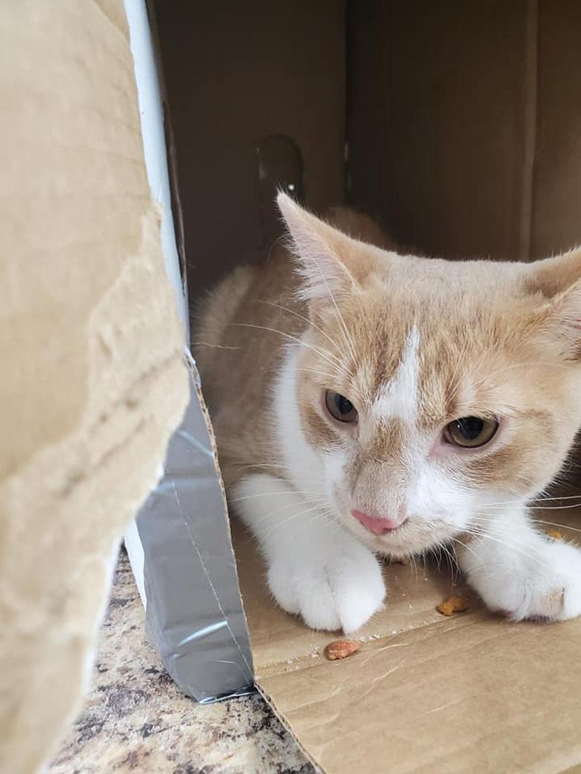 Gattino che esce da una scatola