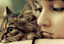 Gatto abbracciato ad una ragazza