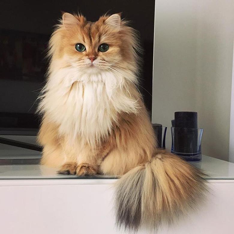 Gatto bellissimo seduto