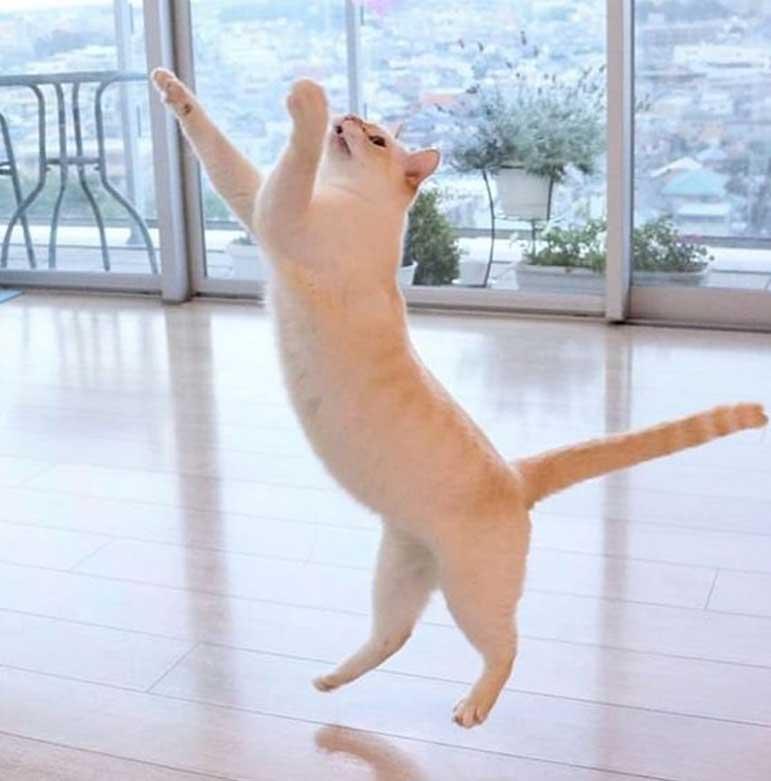 Gatto che balla