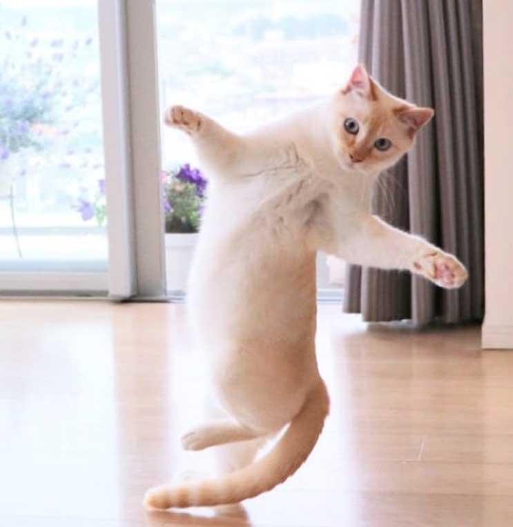 Gatto che danza