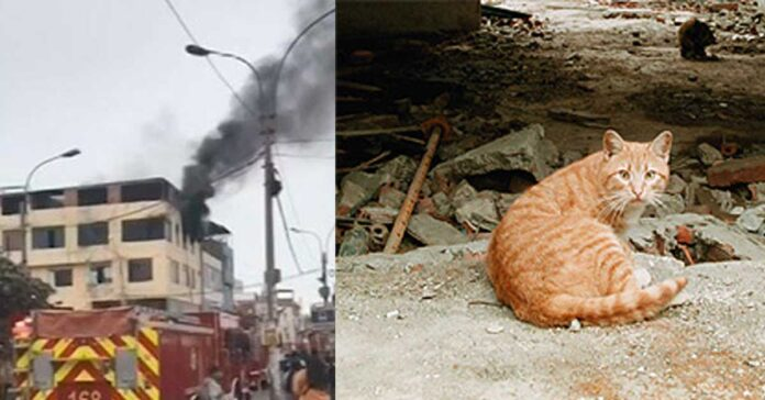 Gatto che ha salvato un bambino dall'incendio