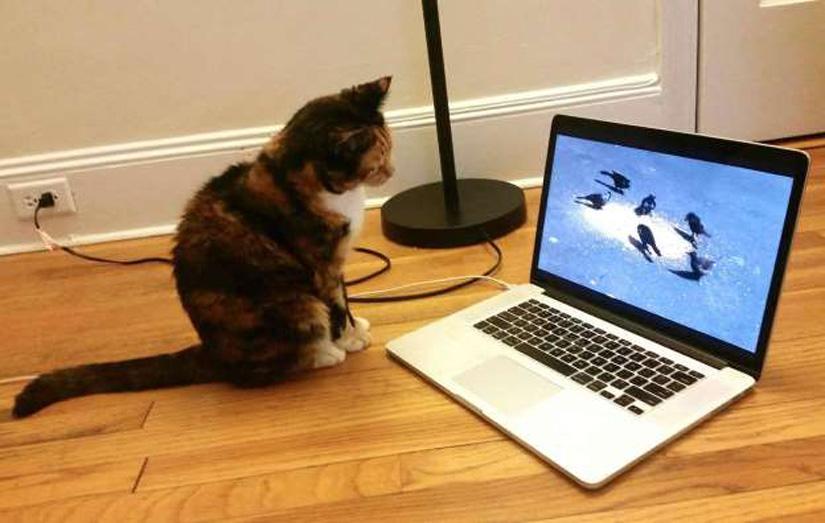 Gatto che osserva un computer