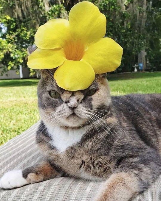 Gatto con fiore in testa