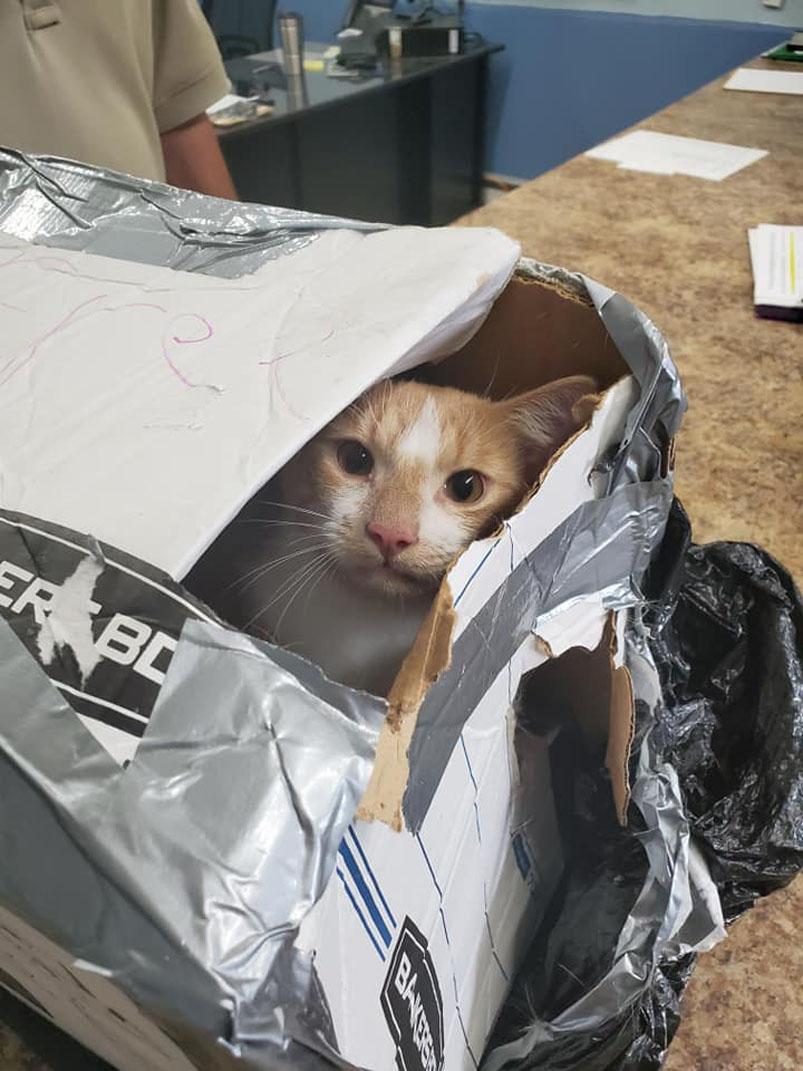 Gatto dentro una scatola