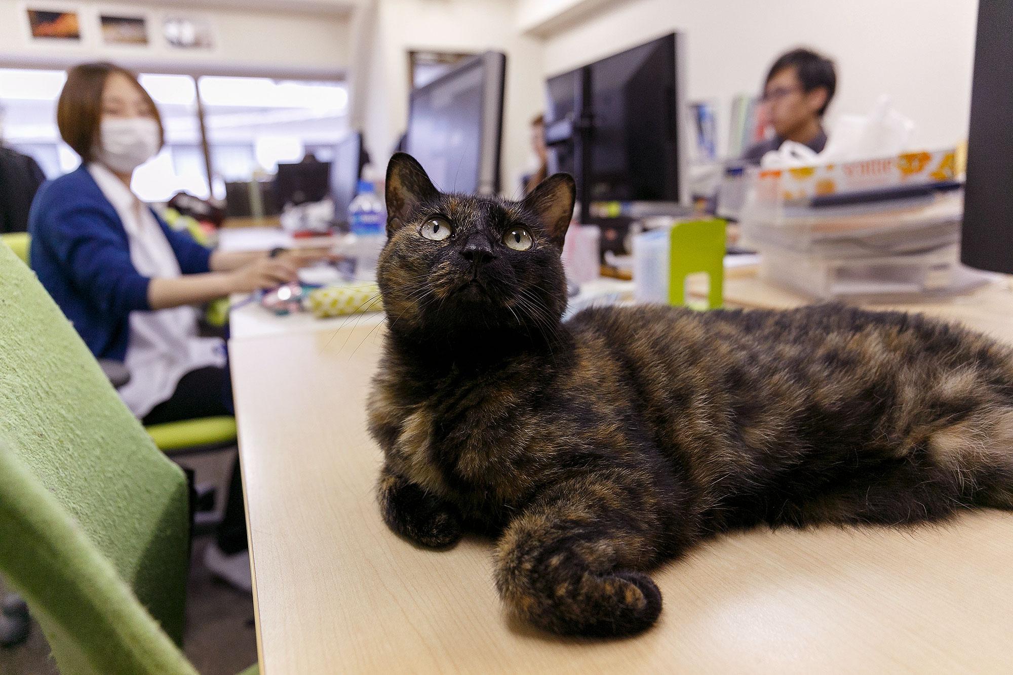 Gatto sulla scrivania di un ufficio