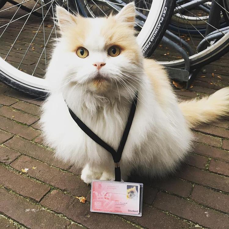 Il gatto Doerak