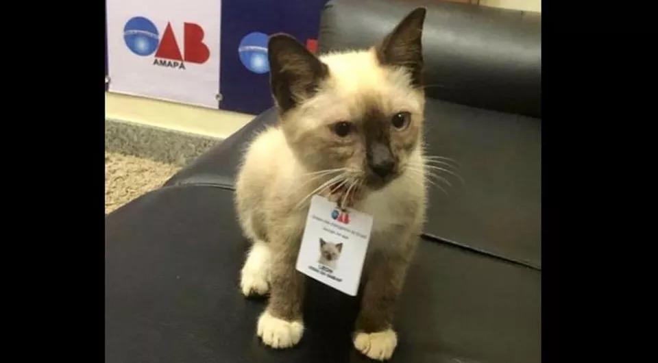 Il-gatto-avvocato