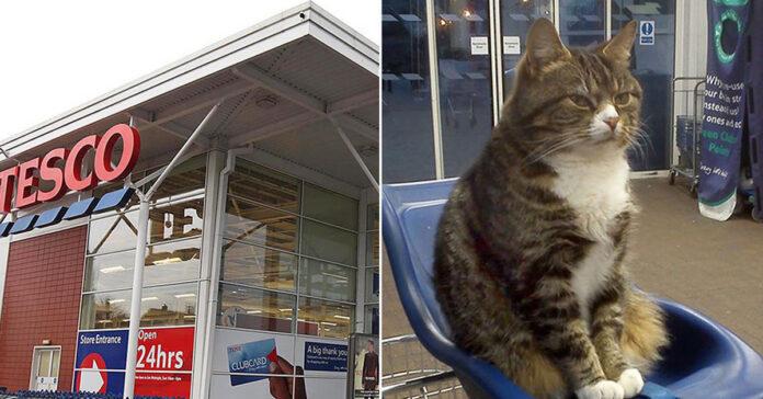 Il gatto che vive in un supermercato