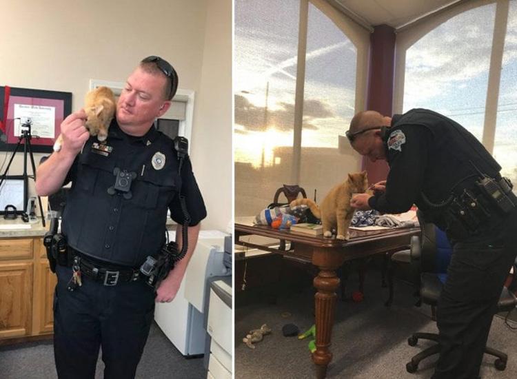 Il gatto poliziotto
