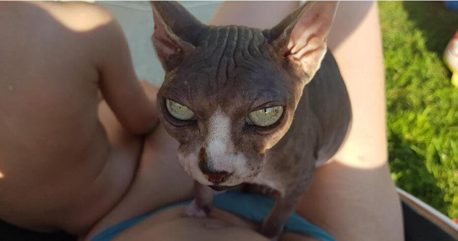 La storia del gatto Djoon