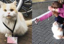 La storia del gatto Dr. Doerak