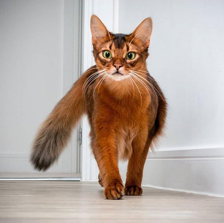 La storia del gatto Errol