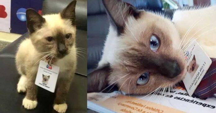 La storia del gatto Leon
