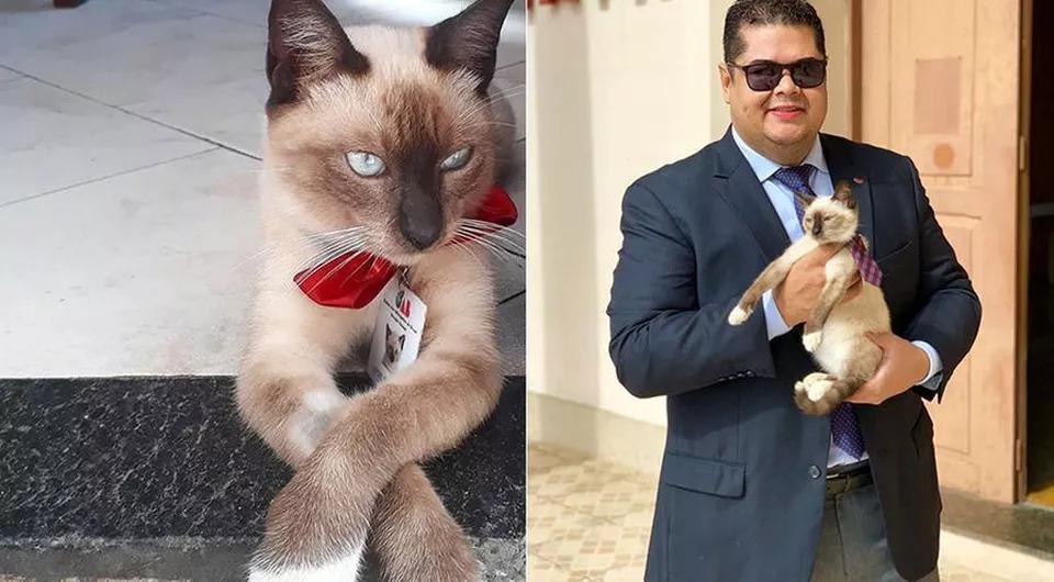 La-storia-del-gatto-Leon-che-è-un-avvocato