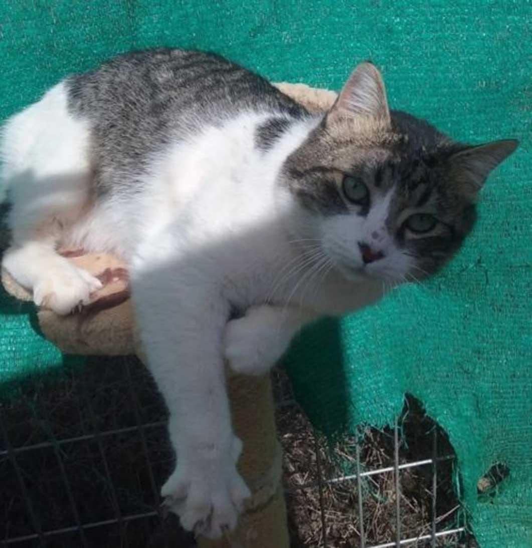 La storia del gatto Lou