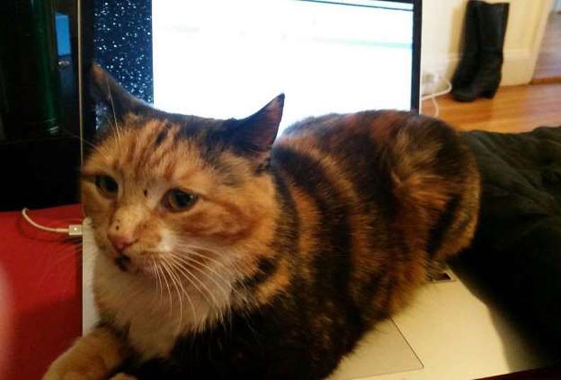 La storia del gatto Mochi