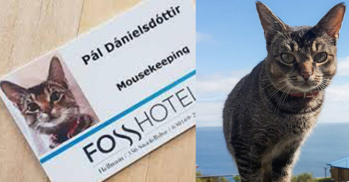 La storia del gatto Pál Dánielsdóttir