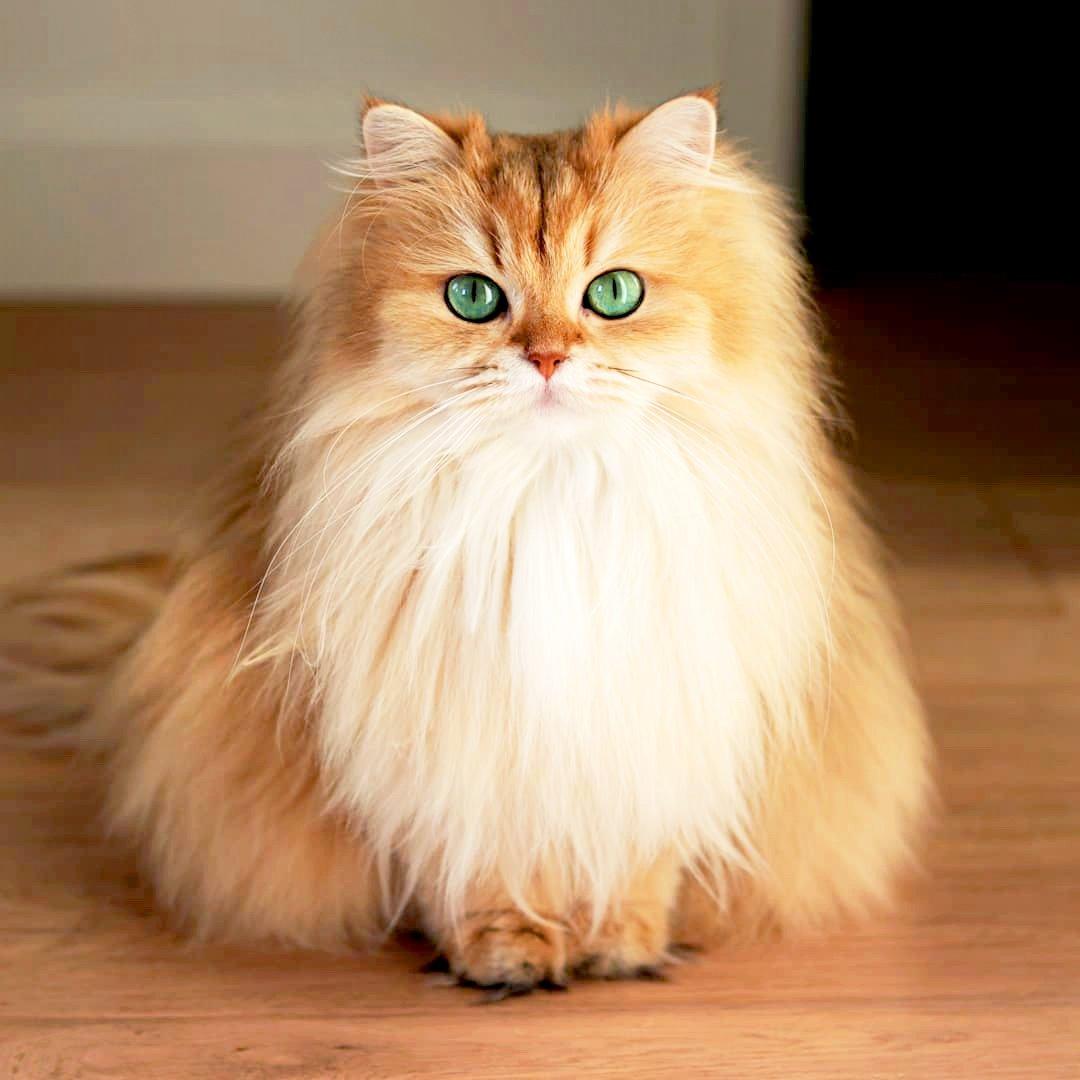 La storia del gatto Smoothie