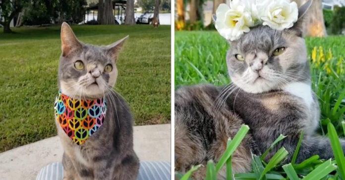 La storia del gatto Willow