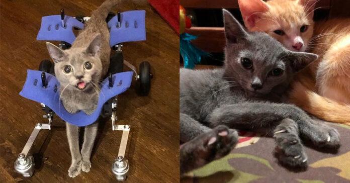 La storia del gatto speck