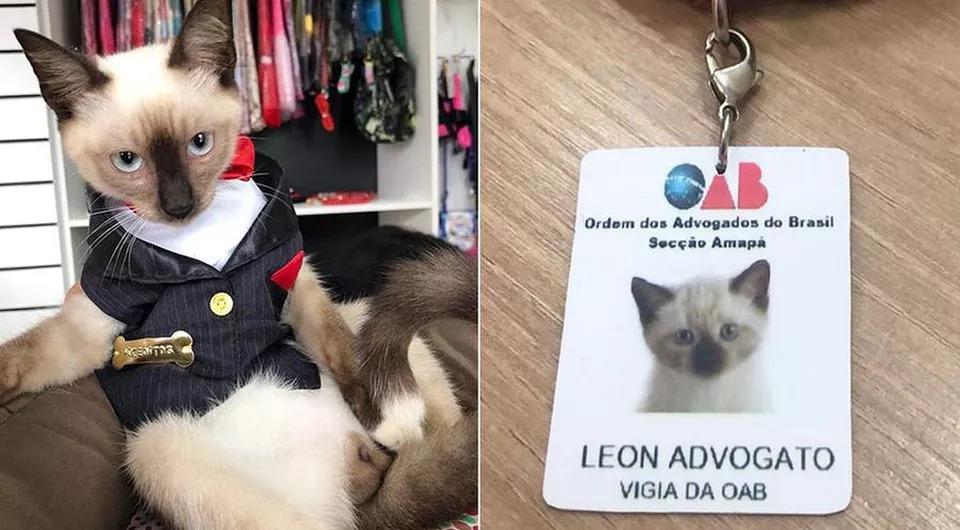 La-vicenda-del-gatto-Leon