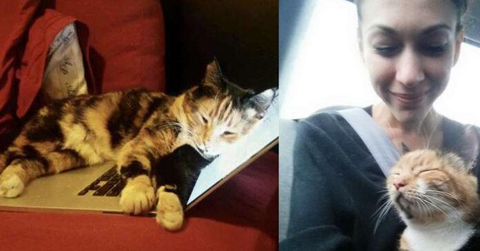 La vicenda del gatto Mochi