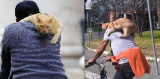 Roma storia del gatto Pepe
