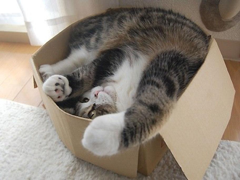 Un gatto dentro una scatola