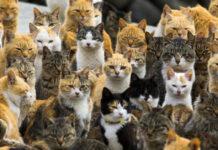 Una colonia felina