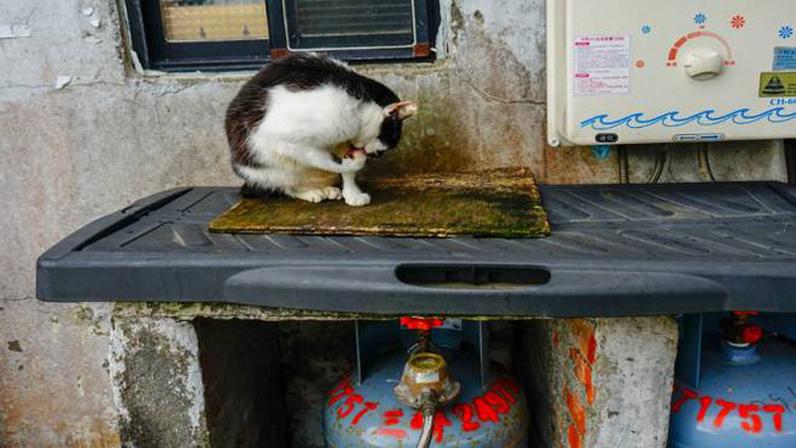 Villaggio dei gatti a Taiwan