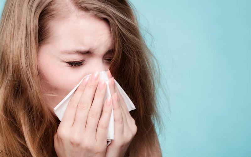 Ocicat il gatto contro le allergie