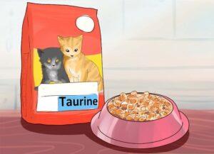 Gatto Manx: alimentazione ideale