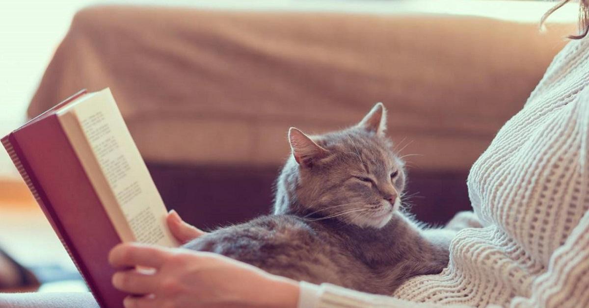 gatto accanto a donna che legge