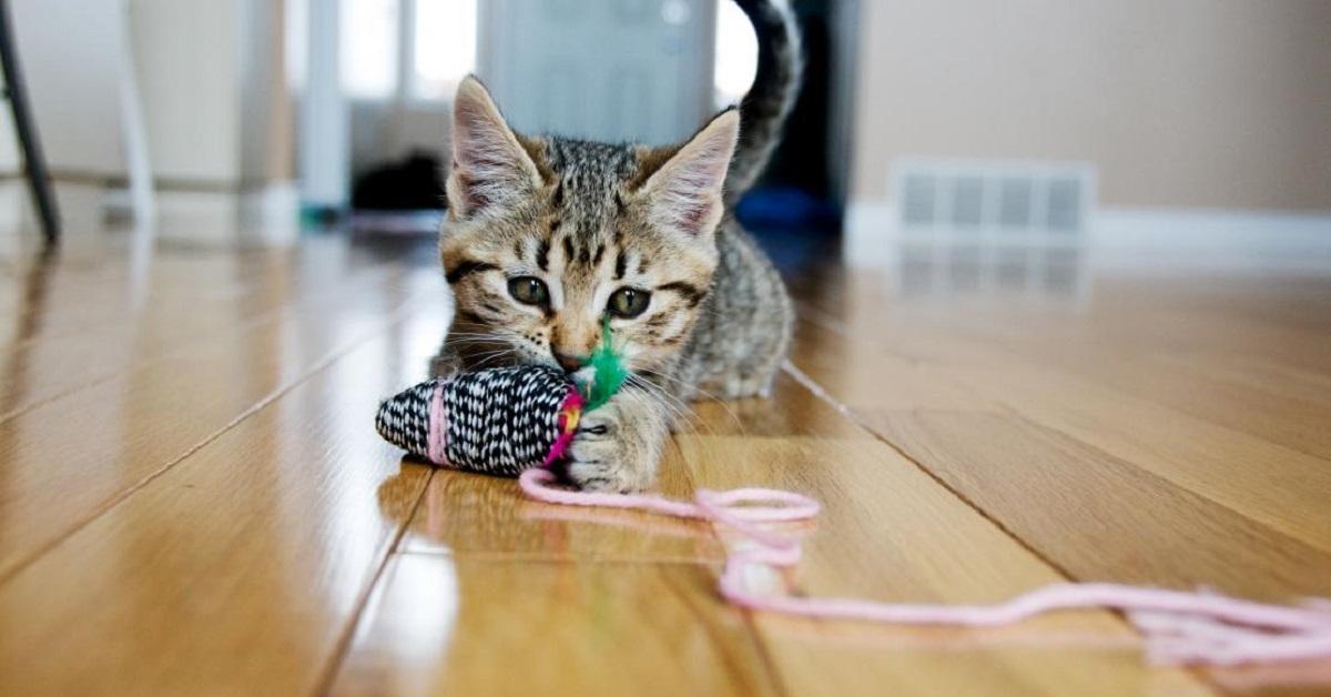 gattino intento a giocare