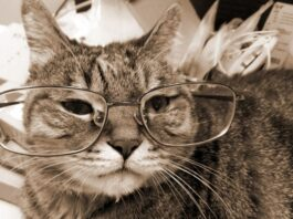 Gatto anziano agitato