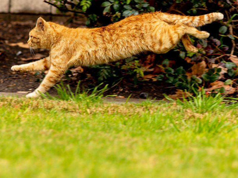Il mio gatto ha la pancia: in realtà è la custodia primordiale