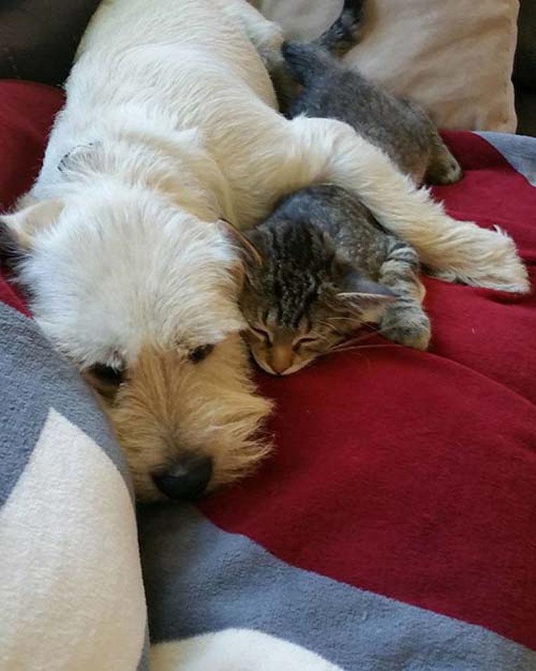 Cane abbracciato ad un gatto