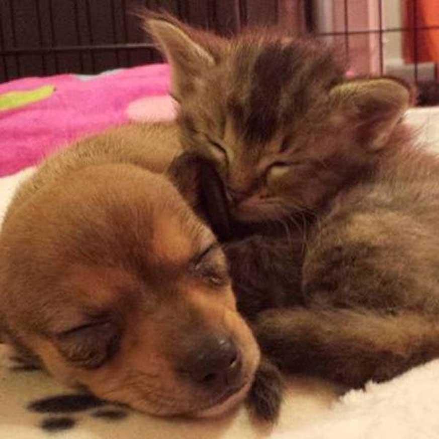 Cane e gatto che dormono insieme